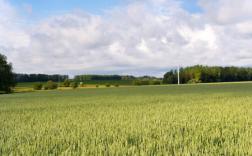 五大问题决定智慧农业的走向