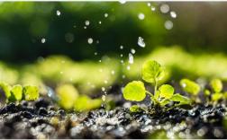 智慧农业真的能颠覆传统吗?