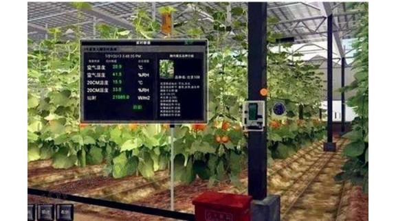 智慧农业:交流学习促进步,经验分享育新机