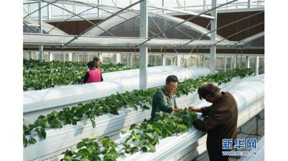 江苏扬州:发展智慧农业 助力乡村振兴