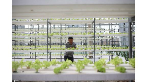 华为5G物联网赋能农业 打造江苏省内先进的农业项目