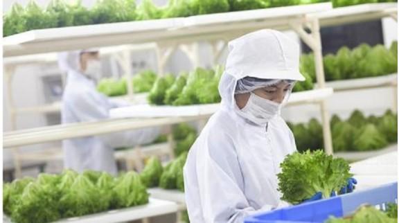 未来农业的三个突破点:植物工厂、智慧农业、功能食品