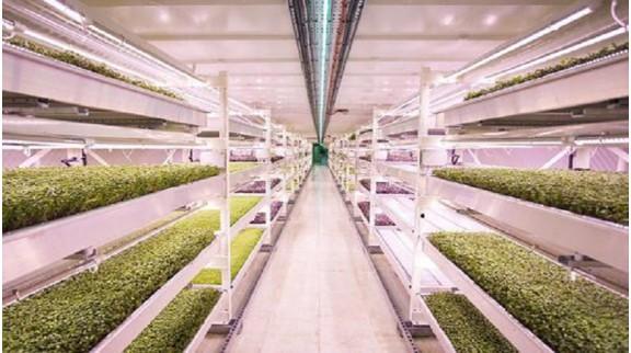 零碳科技公司将发展和布局全球数字化智慧农业,打造城市立体农场