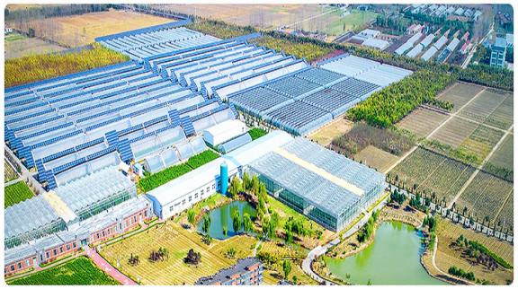 江苏镇江发展现代化高效农业 种菜用上了智慧中控系统