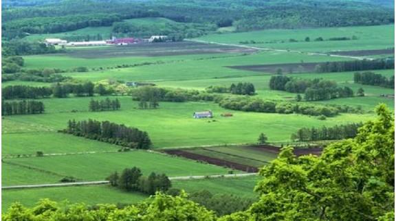 上海市推进农业高质量发展 提出打造13个绿色田园先行片区