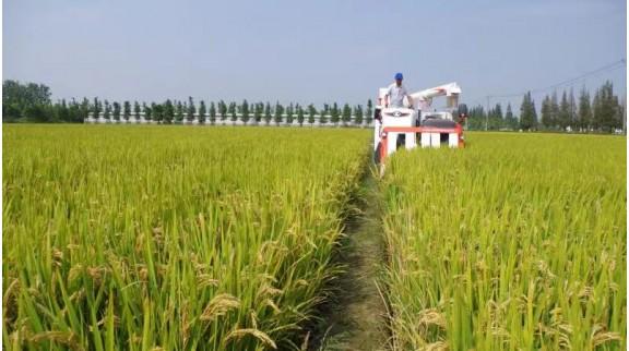 """上海为4000多户""""家庭农场""""立一部法 赋予家庭农场经营者以法律地位"""