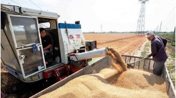 """山东农业总产值就""""领跑""""中国,2020年率先突破了万亿元大关"""