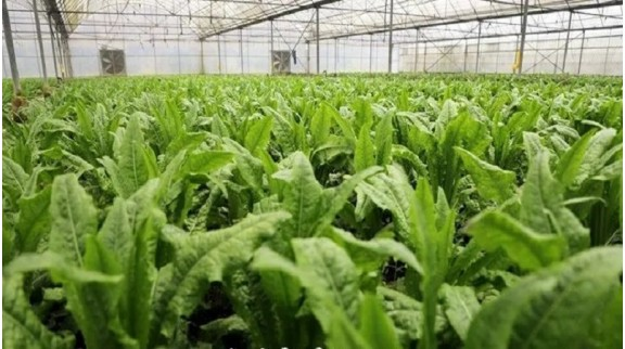 贵阳建成2.5万亩高标准蔬菜保供基地 打造一二三产业融合的现代化农业发展新样板