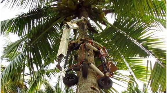 攀树机器人减少人类承担攀登椰子树的危险工作的需求