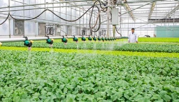 崇明这个智慧农业,1小时能完成1000个秧盘7万棵有机菜的播种任务