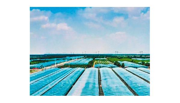 人民日报刊发有关山东智慧农业的图片报道
