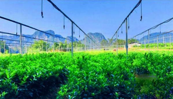 智慧农业助力广西乡村产业振兴